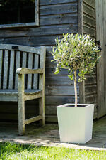 Garden Planter Wooden Hardwood Painted White 37cm