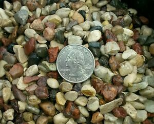 Natural Beauty -20 lbs Aquarium Fish Tank Gravel, Tiny 1/4 In Pebble stones