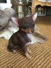 Chihuahua , Dog small Chihuahua brown