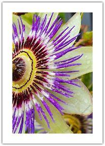 Passion Flower Garden Gardening - Greetings Card Birthday / Blank Notelet