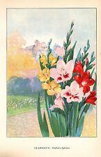 "1926 Vintage GARDEN FLOWER ""GLADIOLUS"" GORGEOUS COLOR Art Print Lithograph"