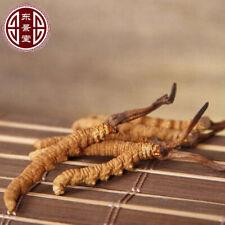 3g Whole Wild Cordyceps Mushroom (Cordyceps sinensis) 100% Organic NON-GMO