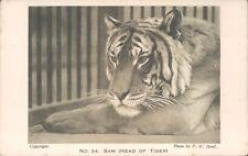 Postcard No 34 Sam Head Of Tiger unposted London Zoo