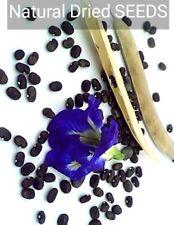 Blue Butterfly Pea (Clitoria ternatea) 20, 50, 100 Seeds