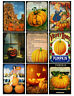 Pumpkin Festival Halloween / Thanksgiving Glossy Finish Card Making Toppers