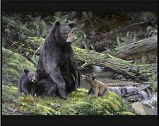 Black Bear Necessities Quilt Top Wall Hanging Panel Fabric Digital Print