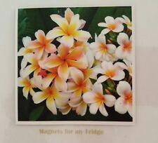FRANGIPANI FLOWERS PHOTO FRIDGE MAGNET  - M98