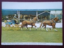 POSTCARD ANIMALS WELSH PONIES COMPETING IN FRANCE