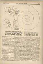 1902 Describing Ionic Volute By Means Of Common Whelk Shell