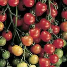 Tomate supersweet 100 F1 - 20 Semillas-Hortalizas
