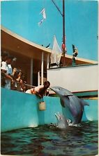Playful Porpoises Miami Seaquarium Florida Postcard animal
