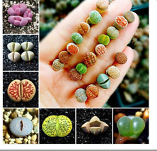 50 seeds  mix lithops rare mini succulent bonsai Ass flower bonsai Pseudotruncat