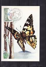 carte  1er jour  faune insecte papillon région Guyane Cayenne  1976
