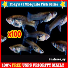 🐟 100 LIVE MOSQUITO Gambusia Koi Aquarium Feeder Guppies Guppy Pet FISH Minnows