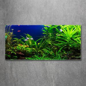 Wandbild aus Plexiglas® Druck auf Acryl 120x60 Landschaften Fische im Aquarium