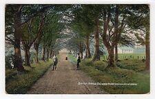 OVERTON AVENUE, STRATHAVEN: Lanarkshire postcard (C23082)
