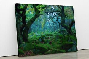 Green Forest Trees Landscape Framed Canvas Wall Art Picture Print Home Decor