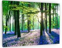 STUNNING BLUEBELL  FOREST NEW HD CANVAS WALL ART PICTURE 678 WOODS WOODLAND