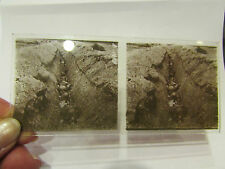 plaque verre stereoscopique stereo photo guerre 1914 18 militaire tranchée 4