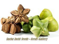 Sacha Inchi - Inka Nuss - 10 Samen der Wunderpflanze aus Südamerika