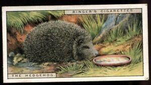 Tobacco Card, Edwards Ringer Bigg, OUR PETS, 1926, 2nd Series, Hedgehog, #12