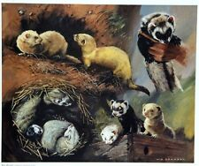 "Limited edition signed print  ""Just Ferrets"" by the late Vic Granger"