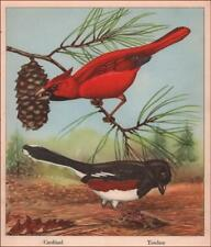CARDINAL & TOWHEE BIRDS  colorful vintage print by Rex Brasher, authentic 1940