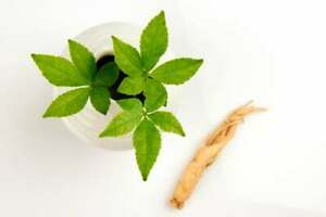 50 Female Ginseng Seeds - Medicinal Properties - Shipped from Iowa. Made in USA