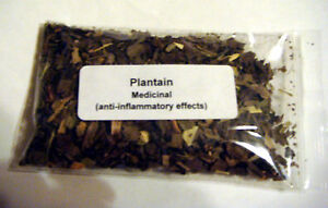 Plantain Whole Herb Anti-inflammatory effects