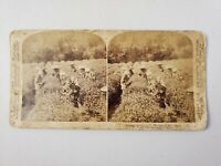 """ANTIQUE STEREOVIEW PHOTO CARD """"PICKING THE FAMOUS UJI TEA NEAR TOKYO, JAPAN"""""""