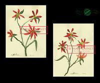 Poinsettia Flower Sprigs 2012 Original Watercolor 2 Paintings SIGNED C Peterson
