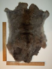Natural Papillon English Rabbit Pelt/Hide/Skin/Fur #1 - Crafts, Kids, Sewing