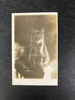 RPPC Real Photo Postcard - Cat
