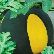 Glass Ball Watermelon Seed Fruit Seed Delicious Cute Gift 1 Pack 10 Seeds