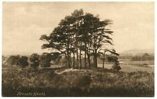 Reigate Collectable Surrey Postcards