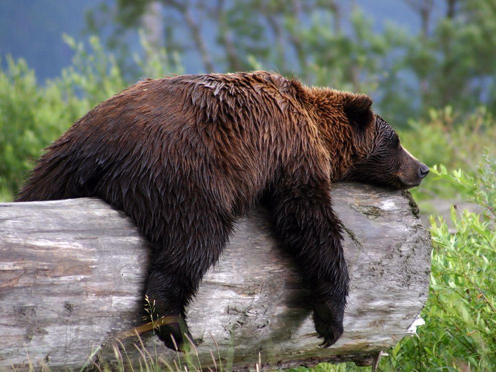 Big Bears Treasures