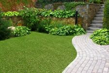 NEW Synthetic Artificial Grass Turf 40 sqm Roll - 20 mm - LOWEST PRICE ON EBAY