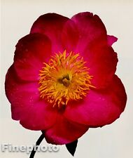 1980 Vintage FLOWER Botanical Fine Art PEONY Photo Litho Plate IRVING PENN 11x14