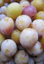 PRUNIER : MIRABELLE de meuse Noyaux Prunus domestisca d/'Arbre Fruitier