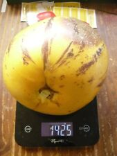 10 PEPINO Cutting PLANT - 10 stem cuttings - fast and easy to grow~ free postage