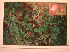 (NL1487) FLOWERS ROSE (BLOEMEN ROOS) 1994 NETHERLANDS maximum maxi card postcard