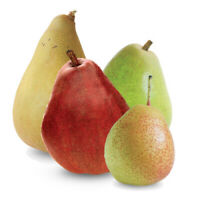 3 Pieces Pear Tree GRAFTED , Direct Grower,груши,armud tinq,كمثرى