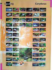 AQUALOG: Poster Corydoras LAMINATED