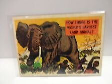 1957 Isolation Booth Card # 21 How Large Is The World's Largest Land Animal ?