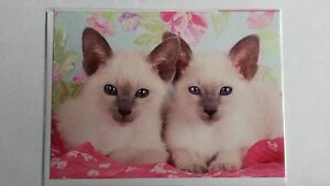 Cute White kittens with pink back ground card for all occasions by animal magic