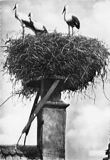 BF40016 alsace nid de cigogne stork france   bird oiseau