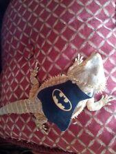 Lil' Bestie Batman Cape for Bearded Dragons reptiles