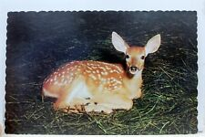 Animal Deer Au Repos Postcard Old Vintage Card View Standard Souvenir Postal PC