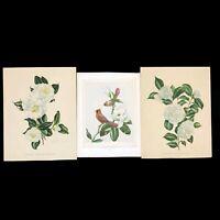 Lot of 3 Vintage Flower Floral Botanical Prints Camelia Cardinal Magnolia Decor