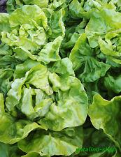 Pflücksalat Lollo Rossa circa 500 piante semi sementi semi insalata ortaggi semina